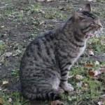 公園であくびする猫