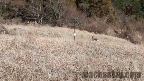th_deer_0