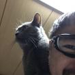 2:22猫の日