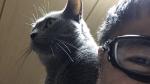 2/22 猫の日 ロシアンブルーのねこ ブンタを紹介します。
